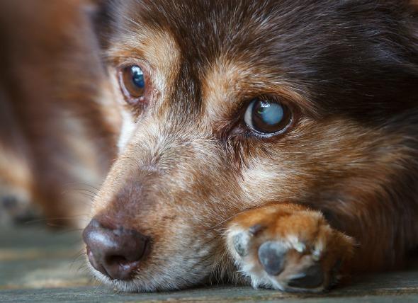 Elderly Pet Header
