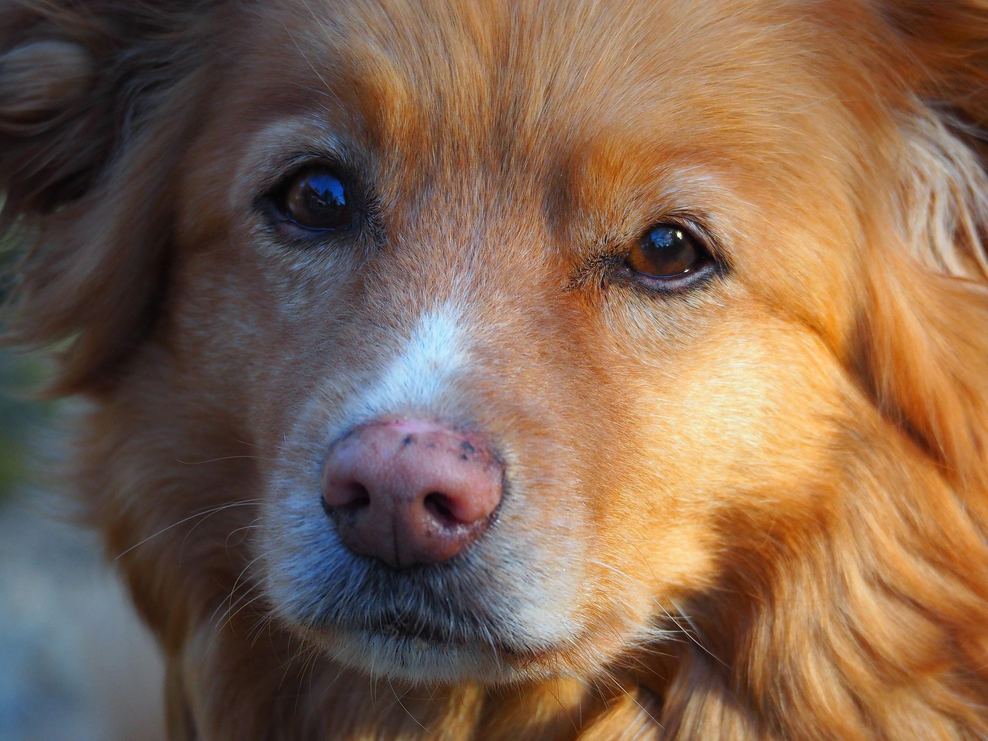 dog-3367113_1920