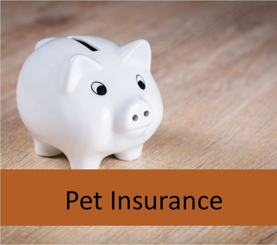 pet insurance for elderly pets