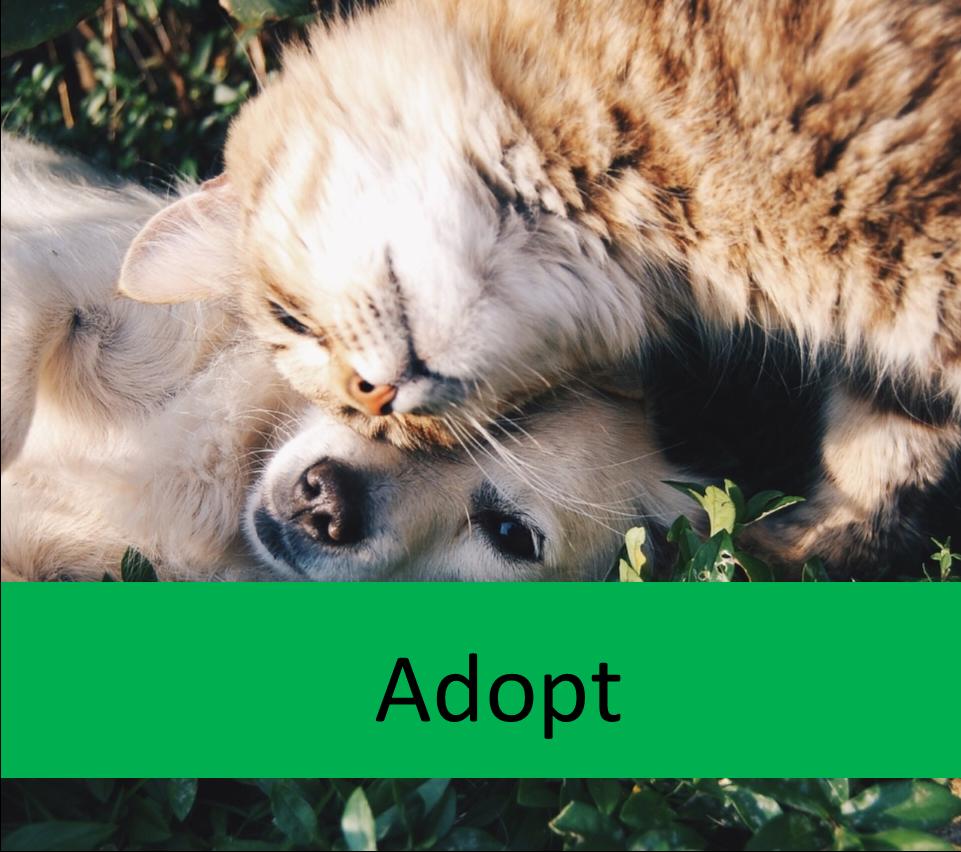 adopt elderly pets
