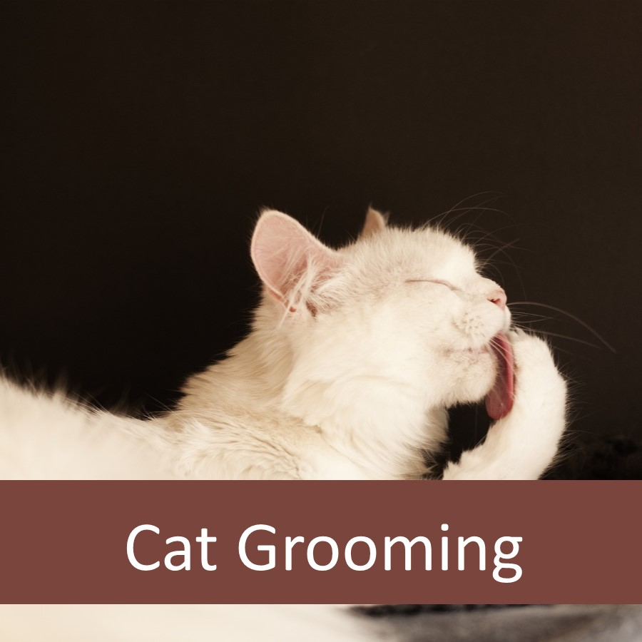 Pet Products for Elderly Cats 9