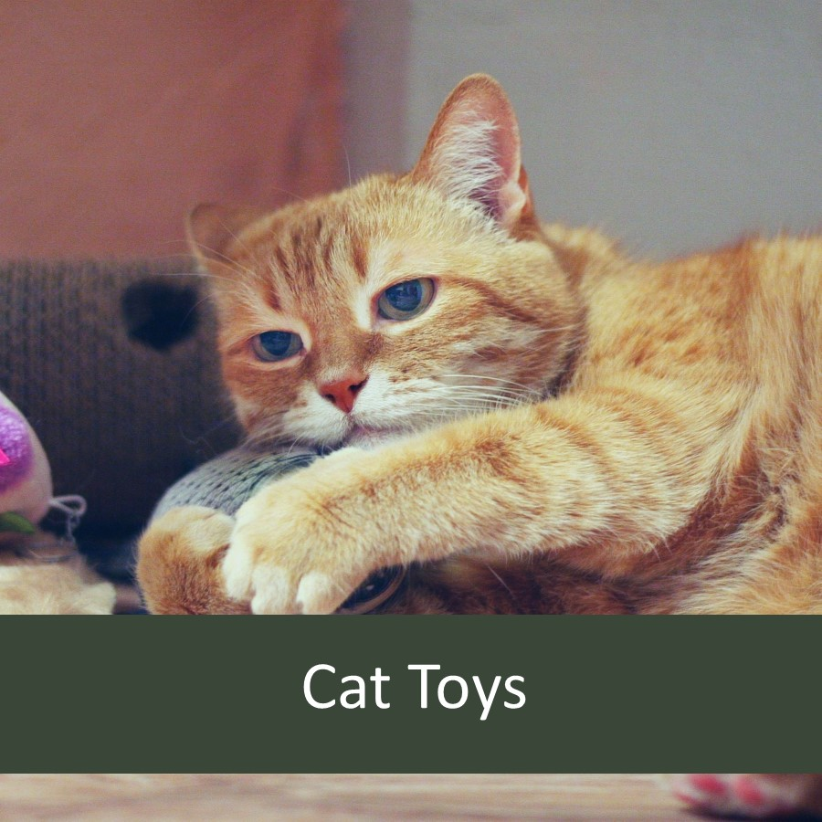Pet Toys for Elderly Pets 3