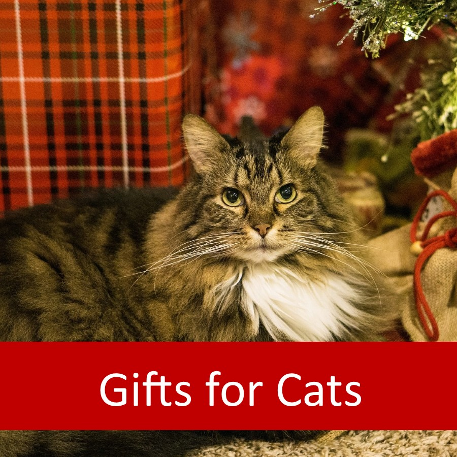 Pet Products for Elderly Cats 2