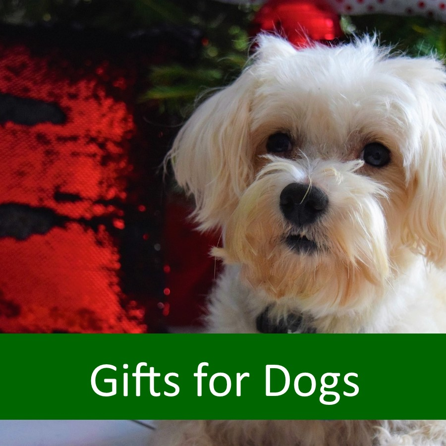 Pet Products for Elderly Dogs 5
