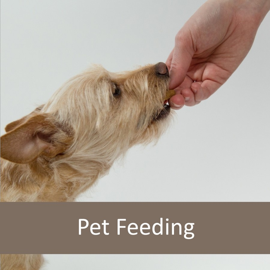 How to Help Feeding Finicky Pets